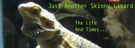 Another Skinny Lizard